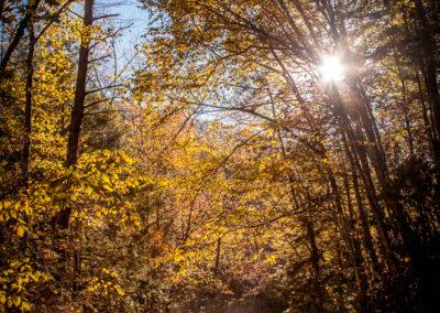 IG_RobertCoomer_IG_RobertCoomer_untitled shoot_Canon EOS 5D Mark II_2013_MG_2365